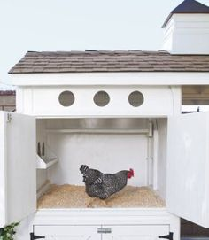Designs And Plans To Install Perfect Chicken Coop