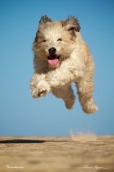 Court-elle encore ? | Still running?: http://tazintosh.com #FocusedOn #Photo #Chien #Dog #Canon EF 100-400mm f/4.5-5.6L IS USM #Canon EOS 7D #Ciel #Sky #Courir #Run #Museau #Snout #Patoune #Patte #Paw #Poil #Animal hair #Sable #Sand #Saut #Jump