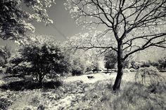 Woodland - Fototapeter