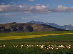 near Swellendam - África-do-Sul