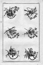 1770 - Ornament Garten Blumen Floristik Kupferstich Wandtäfelung Gärtnerei