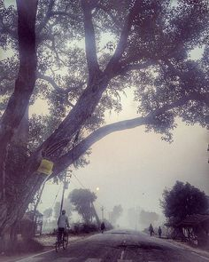 nice Good morning world...#morning #tree #road #bestoftheday #sun #instagood #tbt #photooftheday #beautiful #picoftheday #amazing #weather Check more at sherwoodparkweath...