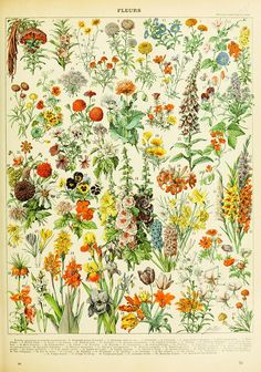 Simple Things All Organic Gardeners Should Know. Your goal is to plant the best organic garden possible. These tips will help you start an organic garden. Vintage Botanical Prints, Botanical Art, Botanical Illustration, Botanical Drawings, Picture Boxes, Picture Wall, Picture Frames, Poster Wall, Poster Prints