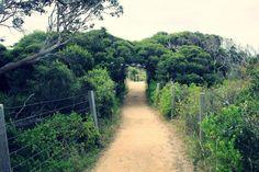 Dirt Path.