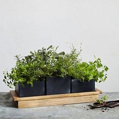 Wood + Chalkboard Herb Planter Set #WestElm