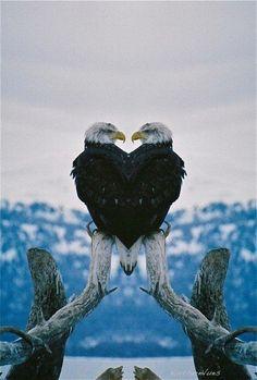Bald eagle of Prey Pretty Birds, Love Birds, Beautiful Birds, Animals Beautiful, The Eagles, Bald Eagles, Photo Aigle, Aigle Animal, Animals And Pets
