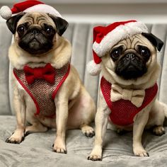 christmas costumes for guys Cute Animals In Costumes Puppies Pugs In Costume, Pet Costumes, Pug Pictures, Pug Pics, Christmas Puppy, Dog Facts, Pug Puppies, Pug Love, Cute Gay