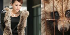 In China, Animals, usually dogs and cats, are often skinned alive to provide fur for fashion production. There is little regulation of animal treatment or how the fur is described or sold. PLEASE... can you please spare 30 seconds to Please to sign this petition, then another 30 seconds to repost ? Tis petition can have real impact! You will have done two good deeds today :)