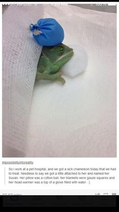 TBH, I thought it was an ice pack and wondered how they knew she had a headache - Head Ache Cute Funny Animals, Cute Baby Animals, Funny Cute, Animals And Pets, Hilarious, Cute Reptiles, Reptiles And Amphibians, Cute Creatures, Beautiful Creatures