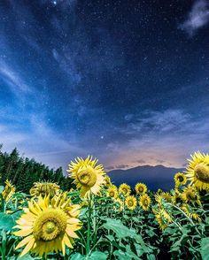 Akeno Sunflower Field, Hokuto, Yamayashi, Japan, 明野ひまわり畑, 北斗市, 山梨, 日本 Beautiful World, Beautiful Places, Where The Sun Rises, Japan Holidays, Sky Landscape, Earth From Space, Sunflower Fields, High Art, Most Visited