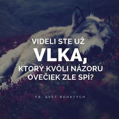 Wolf and sheeps. General Quotes, Story Quotes, True Words, True Stories, Karma, Slogan, Quotations, Tattoo Quotes, Literature