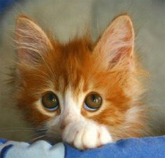 This kitty reminds me if my sister when she was younger. Bright orange hair and all!