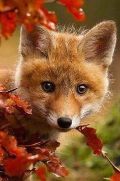 Cute baby fox #Foxes #Cuteness