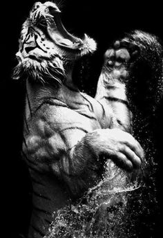 Even the most power tiger will drown if his wounds pain him too much to swim.