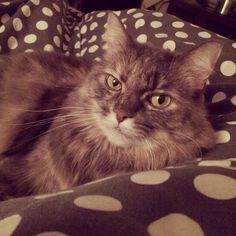 Nicki Cat | Pawshake Toronto