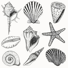 Seashell Drawing - Seashell Tattoos Shells Collection Vector Set With Seashells Shell Drawing Amazing Tone Natural Form Art Gcse Art 15 Shells 01 Shell Tattoos . Starfish Drawing, Seashell Drawings, Seashell Tattoos, Theme Tattoo, Shell Collection, Illustration, Shell Art, Art Graphique, Ocean Art
