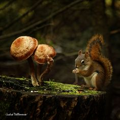 squirrels like to chat, too--the brownie is under the mushroom, where you can't see her...