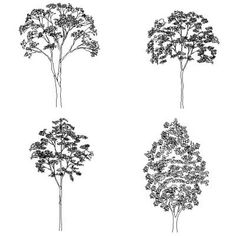 Deciduous Trees In Elevation - Free Plants - Cadyou