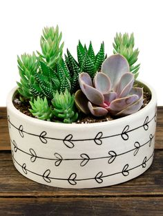 Heart Vine Succulent Kit