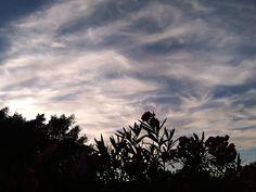 Desde las Islas Canarias  ..Fotografias  : Terminando el año.....San Fernando de Maspalomas G...