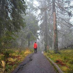 Koli 7.11.2015 #koli #finland #kolinationalpark #kolinkansallispuisto #foggyday