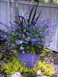 Love the purple container garden