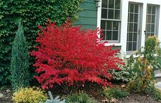 My FAVORITE Gardening Blog for Minnesota Gardens