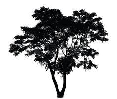 Baum Silhouette Pfauenstrauch Lizenzfreie Bilder