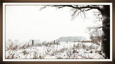 Januari 2015 achtertuin
