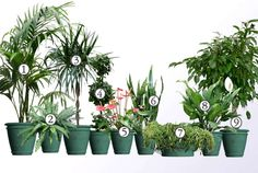 rośliny doniczkowe oczyszczające powietrze Mini Plants, Ikebana, Feng Shui, Gardening Tips, House Plants, Diy And Crafts, Sweet Home, Green, Flowers