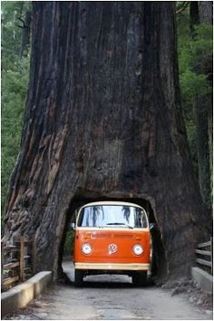 Drive through tree, Sequoia National Park, California ('Heard that this tree fell, but I still want to go...)
