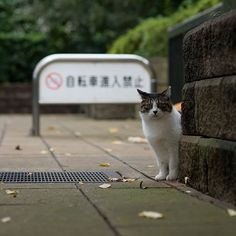 Instagram media by gph2 - タテヨコ比が… おはようございます♪ \(´O`/)°゜ Good morning!  or Good afternoon! or Good evening!  or Good night! #stray #cat #park #Tokyo #Japan