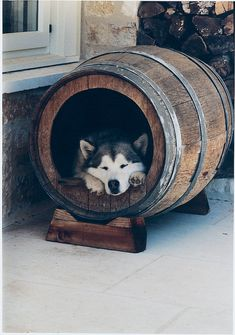 Your furry friends will be itching to get in the doghouse once they spot these stylish pads. Bird Barn, Barn Owls, Animals And Pets, Cute Animals, Cool Dog Houses, Wood Dog, Cool Dog Beds, Dog Crafts, Reno