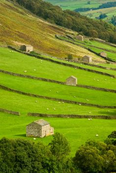 Dales field barns are found in the meadows and were used to store the hay from their surrounding fields over winter. Stock were housed in a shippon on the lower floor in stalls and fed with this hay. #yorkshire