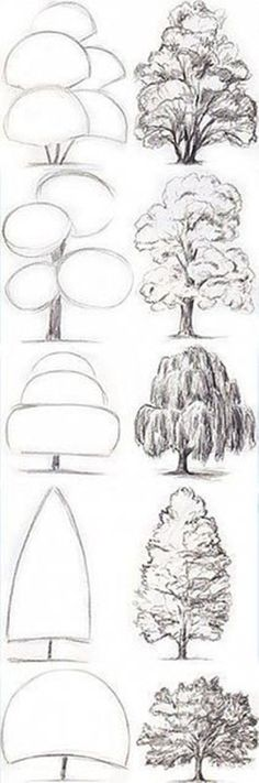 Drawing Tips Tree Drawing Tutorial. Start with basic geometric shapes. Pencil Art Drawings, Art Drawings Sketches, Drawing Lips, Drawing With Pencil, Easy Sketches To Draw, How To Sketch, Things To Sketch, Step By Step Sketches, Drawing Designs