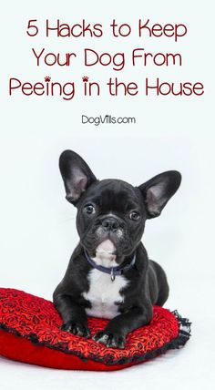 Dog peeing in the house? These hacks can help you get to the bottom of it. The dog peeing in the house issue has a pattern. You just have to find it.