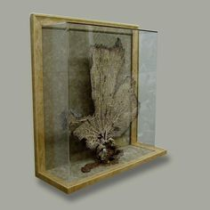 Check out this custom framed sea fan! Exhibition Display, Exhibition Ideas, Shadow Box Frames, The Masterpiece, Shell Art, Displaying Collections, Coastal Decor, Custom Framing, Sea Shells