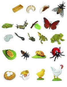 životní cyklus zvířat