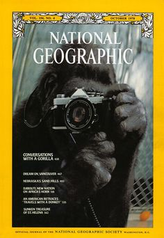 I want to start collecting these again :) The Best of National Geographic Magazine Covers - October 1978 - Conversations with a Gorilla