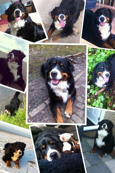 You can never have to much Berner ...