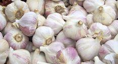 garlic-788830_960_720