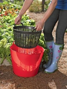 Very smart! Rinse veggies right in the garden and then re-use the water on the plants. Plastic bucket and small laundry basket/colander