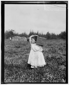 Documenting child labor, 1910, Philidelphia, 8 yr old Jennie picking cranberries
