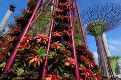 Solaranlagen, die sich in den Kelchen der Supertrees befinden, produzieren den Strom für das nächtliche Spektakel.