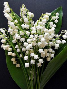 Birth flowers: May - Lily of the Valley & Hawthorn Flowers are a popular birthday gift, and choosing the recipient's birth month flower makes it more personal. Take a look at the birth flowers for May. May Birth Flowers, Rare Flowers, Beautiful Flowers, White Flowers, Small Flowers, My Flower, Flower Power, Image Nature, Pot Jardin