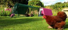 Eglu Go Chicken Coop | Plastic Chicken House for 2-4 Birds