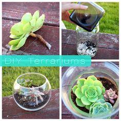 Cute DIY Terrariums - succulents