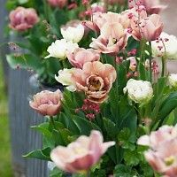 Pale Peony Flowered Tulip Collection