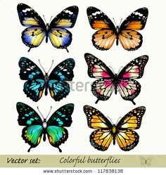 Illustration of Set of realistic butterflies vector art, clipart and stock vectors. Butterfly Sketch, Butterfly Pictures, Butterfly Painting, Butterfly Art, Butterfly Tattoos, Realistic Butterfly Tattoo, Dragonfly Tattoo, Beautiful Butterflies, Tattoo Studio