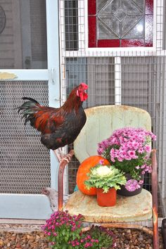 Fall Porch vignette